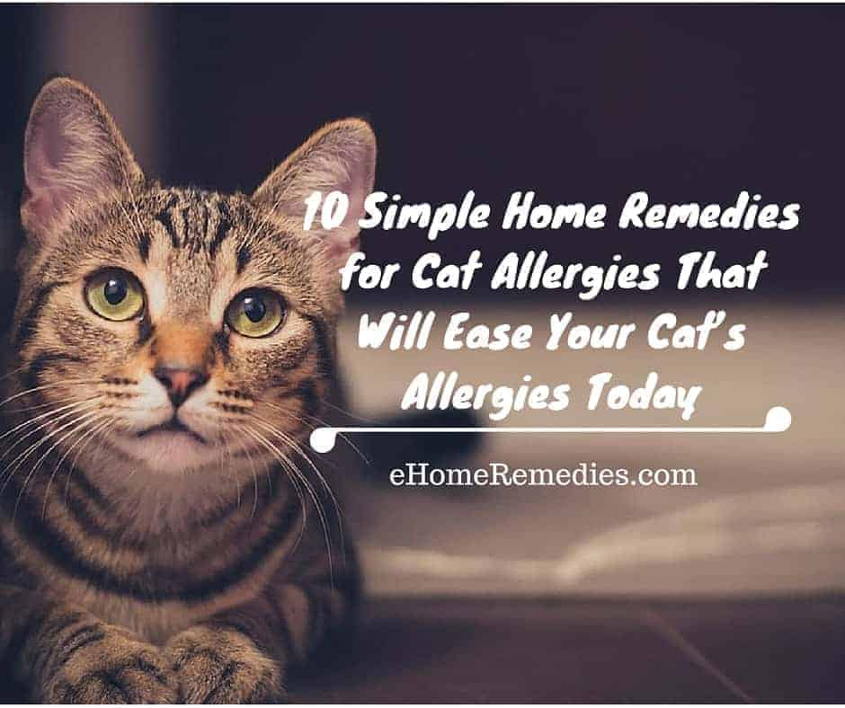 Image Result For Cat Allergy Reme S