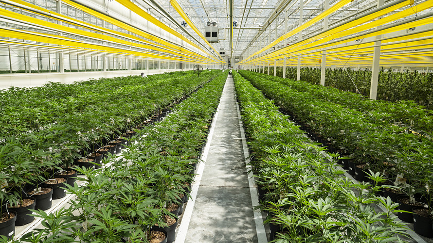 Marijuana Stocks To Watch Aphria Is Positioning Itself As