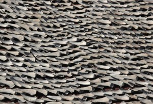 Over ten thousand pieces of shark fins are dried on the rooftop of a factory building in Hong Kong (c) REUTERS / Bobby Yip