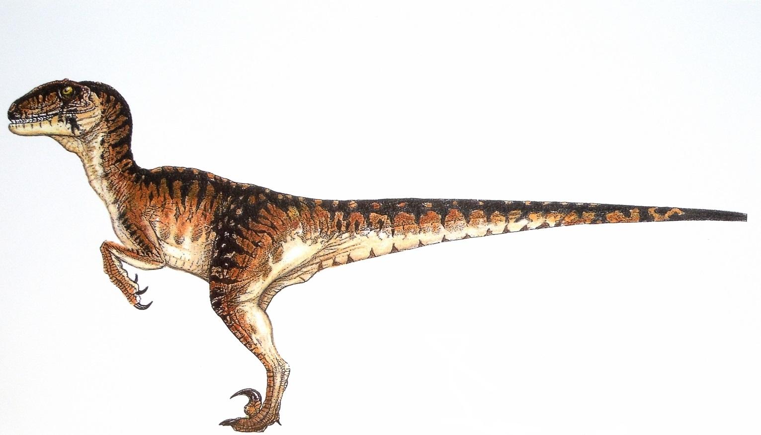 velociraptor4