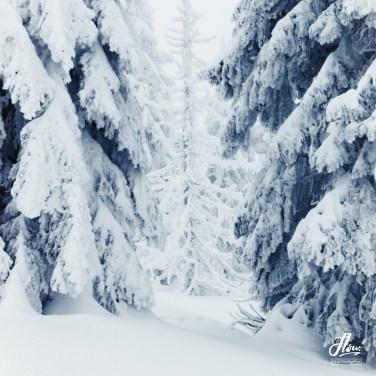 Nationalpark Bayerischer Wald, Deutschland.