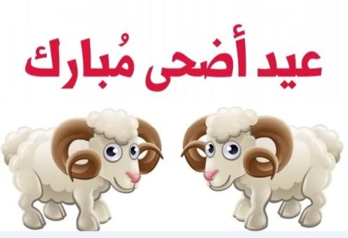 رسائل عن خروف عيد الأضحى المبارك 2020 عبارات مضحكة خروف عيد الأضحي السعيد