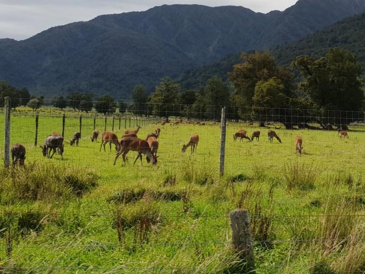NZ Holiday: Snapshot 6