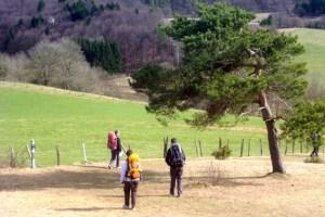 Besucher aus einem Umkreis von 200 Kilometern besuchen verstärkt die attraktive Erlebnisregion Nordeifel mit dem Nationalpark Eifel, um ihren (Kurz-)Urlaub zu verbringen. Bild: Michael Thalken/Eifeler Presse Agentur/epa
