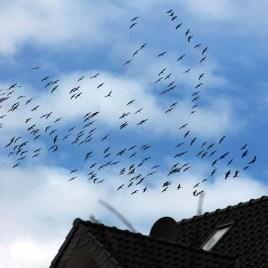 Zugvögel-Wirr-Warr