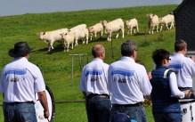Selbt die Kühe auf der Weide gegenüber dem Bürgerhaus lauschten den Klängen der Stehtischmusikanten. Foto: Reiner Züll