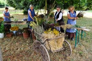. Die Museums-Hauswirtschafterinnen binden die Krautwische. Foto: Hans-Theo Gerhards/LVR