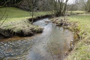 Auf einem gemütlichen Spaziergang ins blühende Genfbachtal sollen die verschiedenen Erscheinungsformen, die Wirkungen und das Fließen des Wassers betrachtet werden.  Bild: Anne Katharina Zschocke