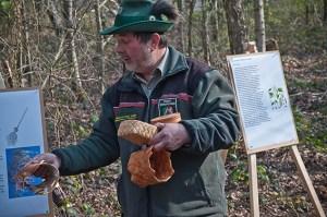Oberforstrat Ingo Esser vom WaldPädagogikZentrum Eifel erklärt, wie man etwa Weidenrinde nutzen kann. Foto: Hans-Theo Gerhards/LVR