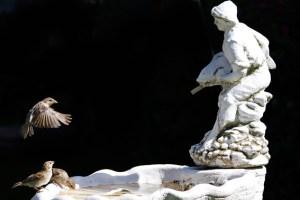 An heißen Tagen sind Vögel dankbar für eine kleine Abkühlung. Bild: Günter Lessenich/NABU