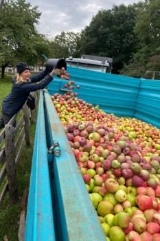 Bei der Apfel- und Birnenernte im LVR-Freilichtmuseum Kommern kam einiges an Früchten zusammen. Anja Liebertz / Förderverein Freilichtmuseum Kommern e.V.