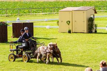 Mit großem Einsatz gingen die Mini-Shettys an den Start. Bild: Tameer Gunnar Eden/Eifeler Presse Agentur/epa