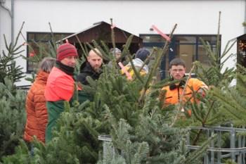 Seit 2019 werden auch am Standort der NEW in Kall frische Weihnachtsbäume angeboten. Archivbild: Michael Thalken/Eifeler Presse Agentur/epa