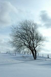 Der Winter lockt zu einem Spaziergang durch die Gemeinde Nettersheim. Bild: Uschi Mießeler/Gemeinde Nettersheim