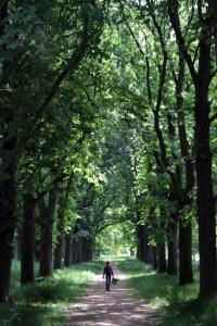 Auch die Kastanienallee in Wachendorf könnte vielleicht vor den Minimiermotten gerettet werden. Archivbild: Michael Thalken/Eifeler Presse Agentur/epa