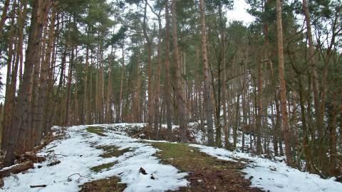 006 single trail