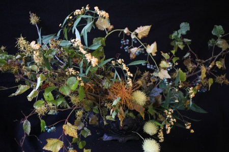 Autumn Witch Hazel