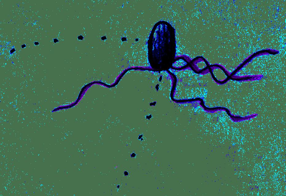 Bacteria and Boltzmann