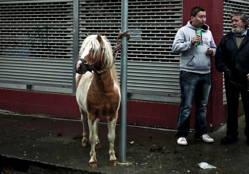Pony tied to a pole