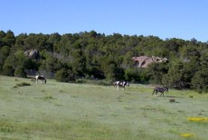 A few of our horses enjoy a beautiful summer day & green pasture.