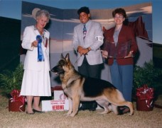 BISS BIS CH Covy-Tucker Hill's Storm Brier, CD,ROM,OFA: German Shepherd Male Reference Sire