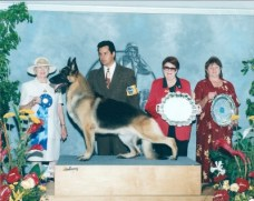 BISS BIS CH: Brierhill's Versace German Shepherd Male Reference Sire