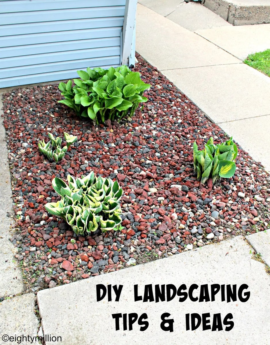 Diy landscaping tips ideas hosta plants for Landscape plant ideas