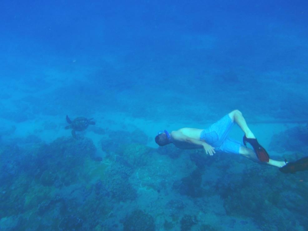 講師紹介・素潜りしているデイビット講師・海亀に向かって潜っている