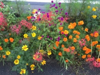 道に咲く花の群生