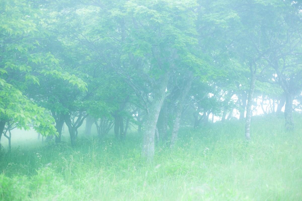 トトロが住んでた大きな木「楠(クスノキ)」の英語名は?