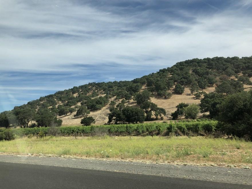IMG 8590 - ナパバレーのオーパスワンで最高級カリフォルニアワインを試飲してみた