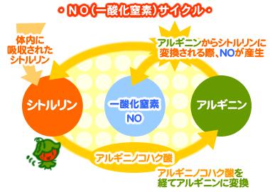 NO(一酸化窒素)サイクル シトルリン・アルギニン