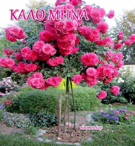 kalo-mhna-Εικόνες για καλό μήνα από το eikones.top