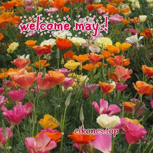 pictures hello may-Welcome May-eikones.top
