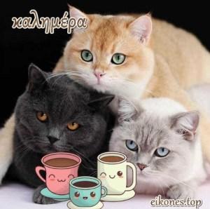 Πανέμορφα γατάκια σας λένε όμορφες καλημέρες!