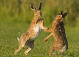 Ζώα και Άνθρωποι:Βικιφθέγματα
