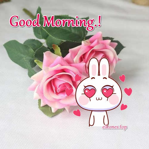 Beautiful Roses for Good Morning.!-eikones.top