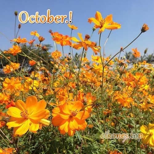 Εικόνες Τοπ Για October- Pictures Top For October.!