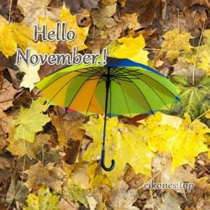 Hello Novemper.!