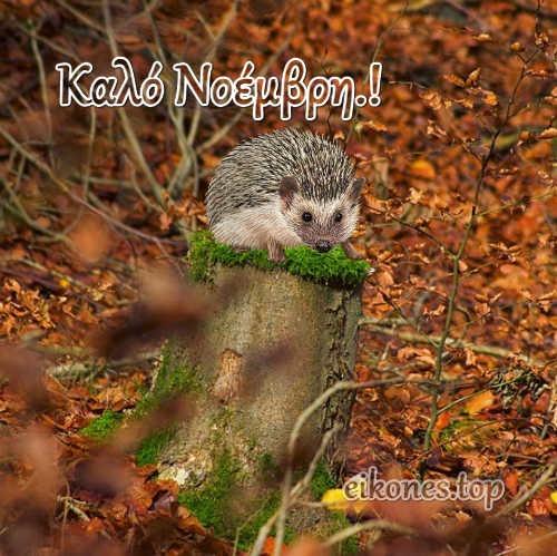 Εικόνες Τοπ Για Καλό Νοέμβρη.!