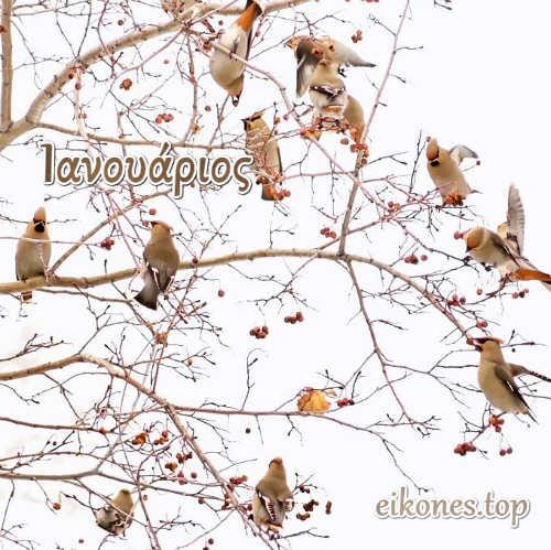 Ιανουάριος: eikones.top