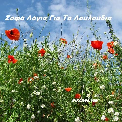Σοφά Λόγια Για Τα Λουλούδια Σε Εικόνες