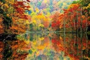 Read more about the article Γιατί τα φύλλα το φθινόπωρο αποκτούν διαφορετικά χρώματα