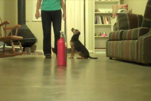 Small black and tan dog sits by her trainer. There is a fire extinguisher in the foreground.
