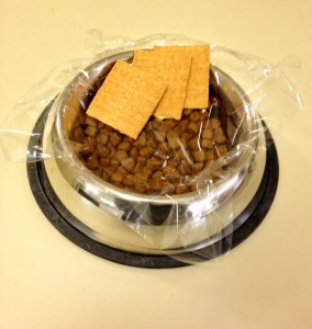 crackers in dog dish