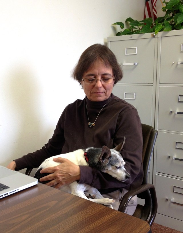 A small, visibly old (lots of gray and white on face) terrier is asleep in brown haired woman's lap. The dog's head is hanging over the woman's arm. The woman is wearing a brown mock turtleneck. The dog is mostly black and white with large ears.
