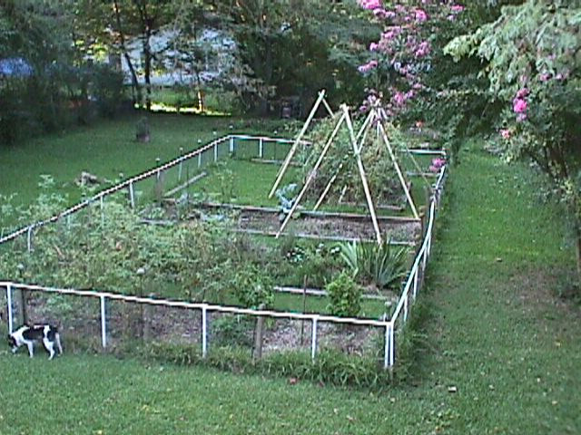 My garden in 2004