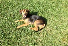 Zani in the grass