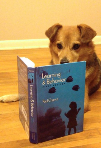A brown dog appears to read a learning theory textbook for research
