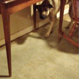 Clara hiding under the table